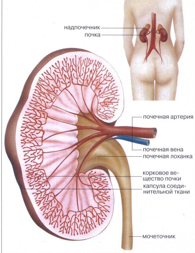sindrom-nemogo-vlagalisha