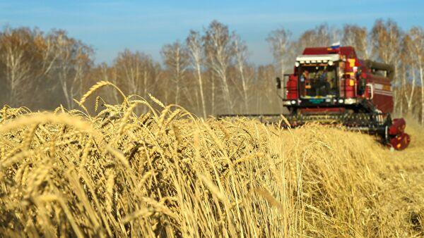 Россия обвалила мировые цены напшеницу