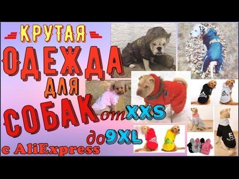 Одежда и аксессуары для собак на алиэкспресс