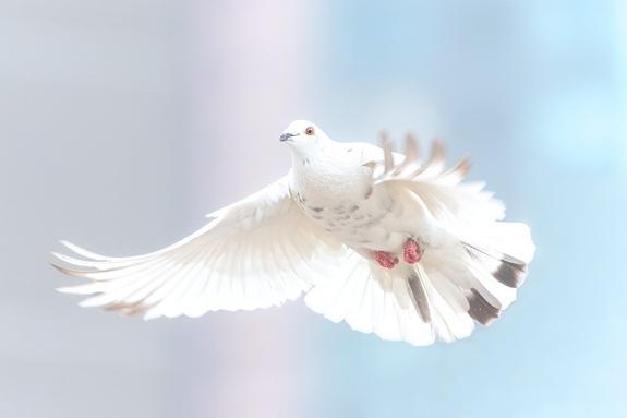 ВБельгии продали гоночного голубя зарекордные 1,9млндолларов