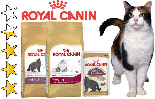 Породы кошек плакат корм royal canin