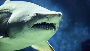 Акула напала наукраинскую семью вЕгипте