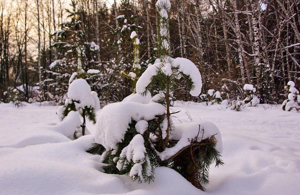 Суббота вЧелябинской области будет неочень холодной, возможен снег