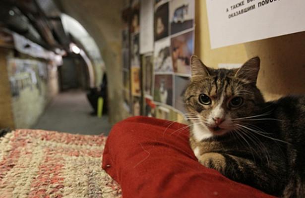 Француз завещал наследство котам изЭрмитажа