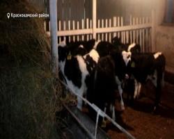 Вхозяйствах Башкортостана переходят назимний режим