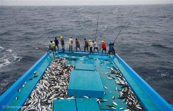 Fish dating line