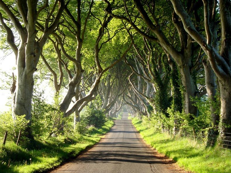 Irland zum kennenlernen tui