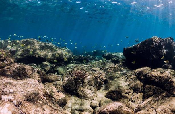 Климат-кризис стал главной причиной вымирания Большого барьерного рифа
