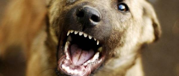 Бешеная собака вСмоленской области заразила пять человек