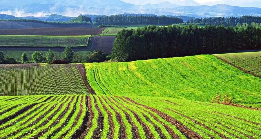 Землю в Закинтос для сельского хозяйства