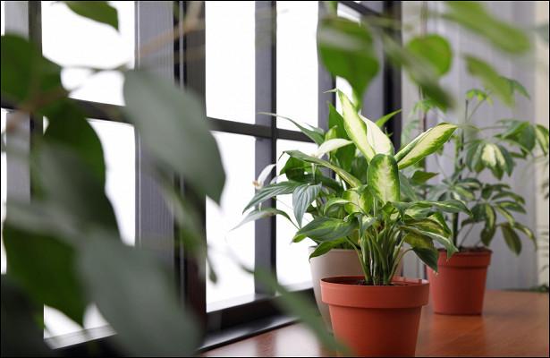 c27b954461a88be8bf311ade773e7e79 - Чтоделать скомнатными растениями перед зимой