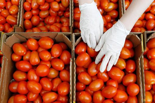 Врач рассказала, кому опасно есть помидоры