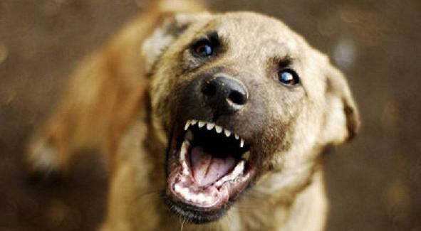 Бурятский парламент выступит синициативой остерилизации домашних животных