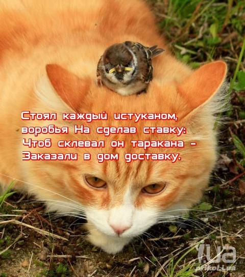 Поговорки пташечка запела как бы кошечка не съела