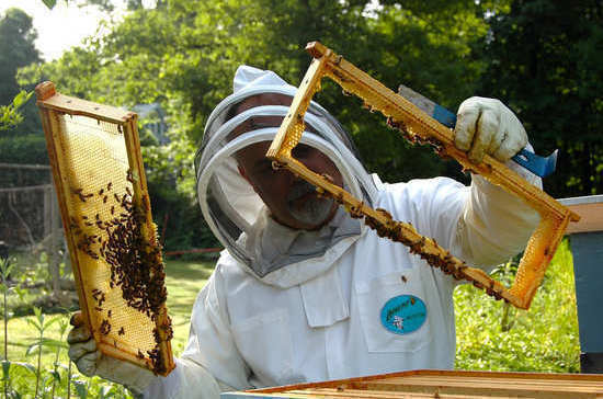 Производителям мёда хотят дать льготные режимы деятельности