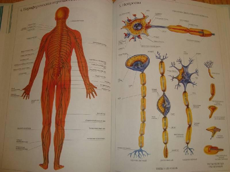 Anatomi Reproduksi Kambing PDF Download