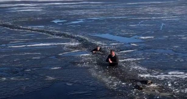 ВПетрозаводске прохожие спасли собак, которые провалились подледОнежского озера