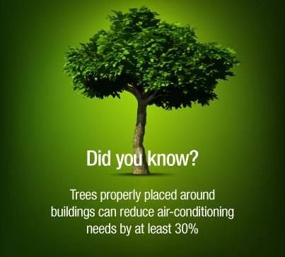 Benefits of Planting Trees - Why Planting Trees is