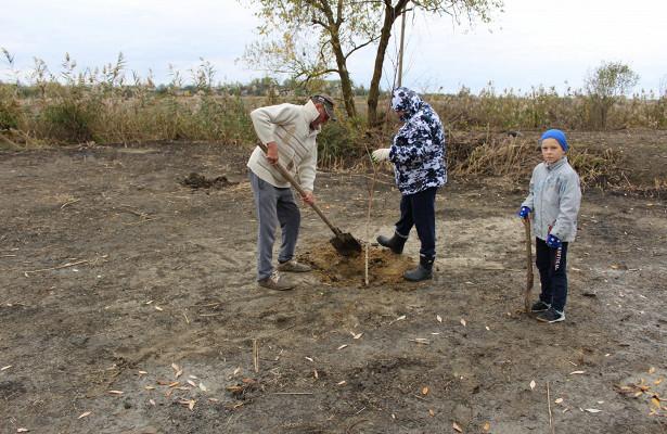 Впоселке подАнапой высадили более 100деревьев