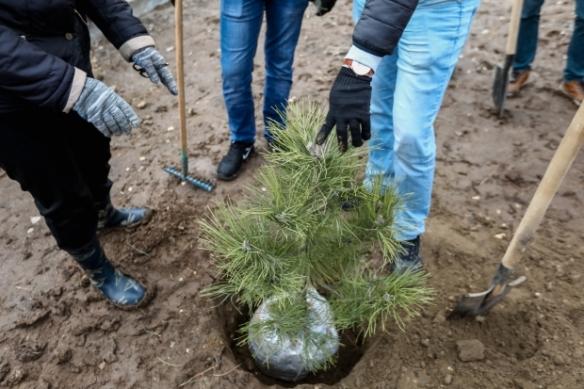 Впарке «Долина» Советского района завершают высадку растений