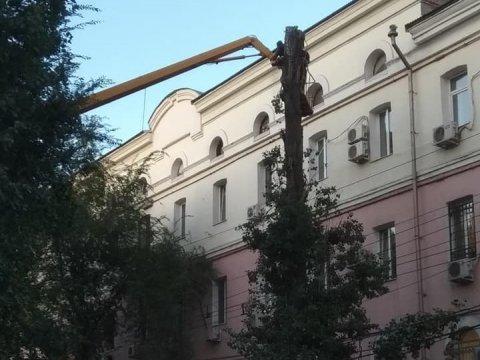 Усаратовского СИЗО-1опилили деревья