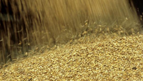 «Ренессанс сельского хозяйства»: Российская Федерация собрала рекордный урожай зерна