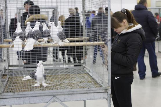 Известный наЯмале голубятник начал разводить пони