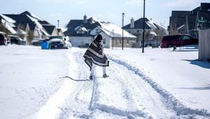 Морозы вТехасе нанесли СШАмногомиллиардный ущерб