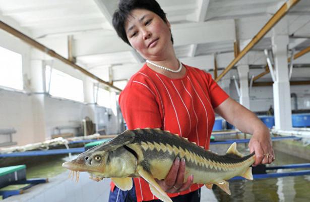 Россия на10,8% снизила вылов рыбы