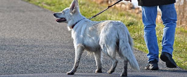 ВКирове начали проверять, какхозяева выгуливают собак