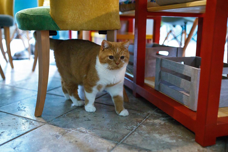 Ресторан Kotomania Cats & Relax Club - фотография 7
