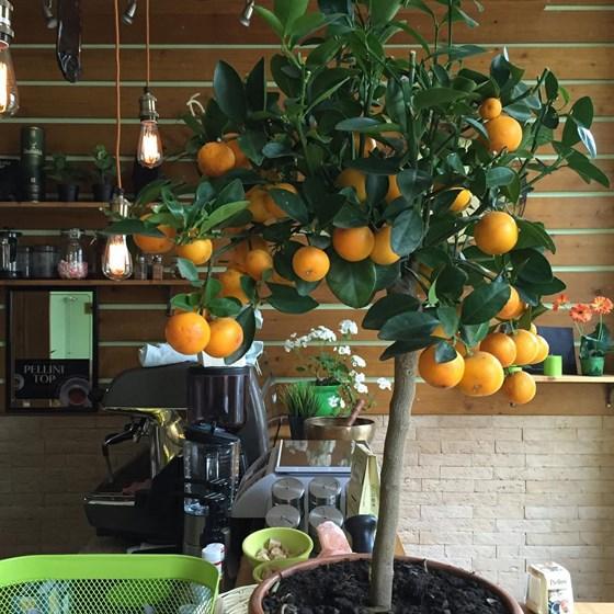 Ресторан Green - фотография 2