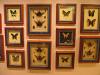 Парк живых бабочек