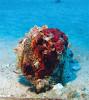 Жемчужина Персидского залива. 5000 лет истории добычи жемчуга в Бахрейне
