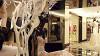 Бергдорф Гудман: Больше века на вершине модного олимпа (Scatter My Ashes at Bergdorf