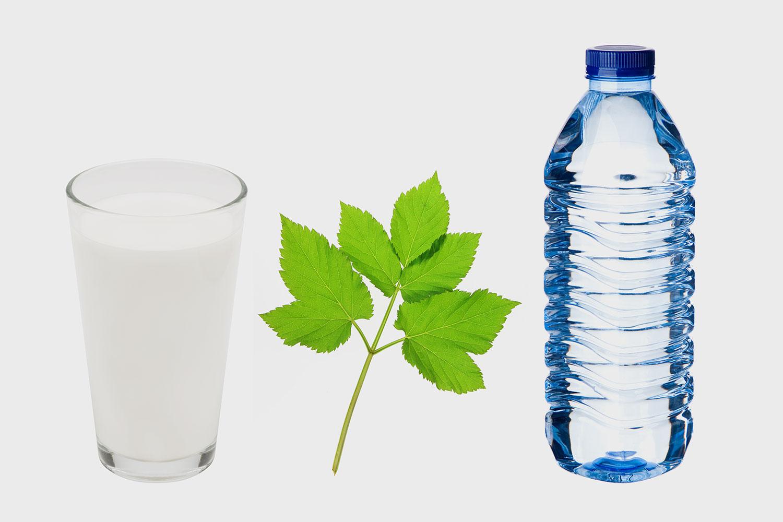 Дикие смузи: сныть, коллаген и другие странные ингредиенты   в здоровых напитках