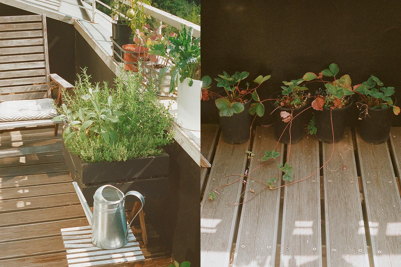 Ландшафтный архитектор Анна Андреева оформляла Крымскую набережную, и при желании можно различить общий стиль зелени в «Музеоне» и на ее балконе
