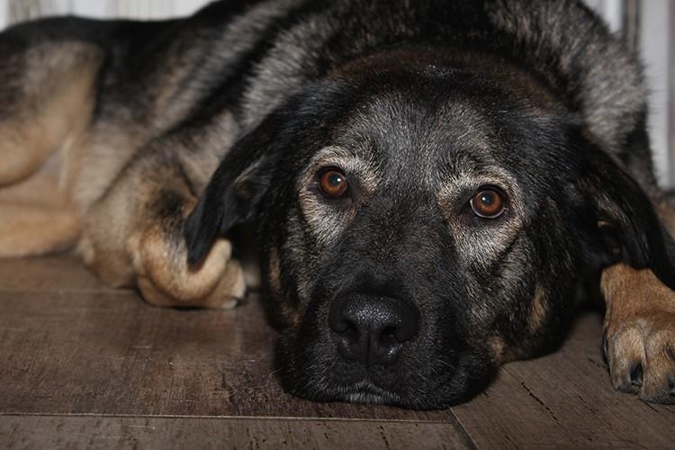 Подать объявление собака сайт вакансий водоканала города кемерово