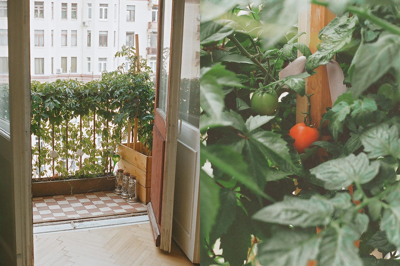При достаточном уходе балкон может заменить приусадебное хозяйство и кормить всю семью помидорами, как в случае Марии Тимошенко