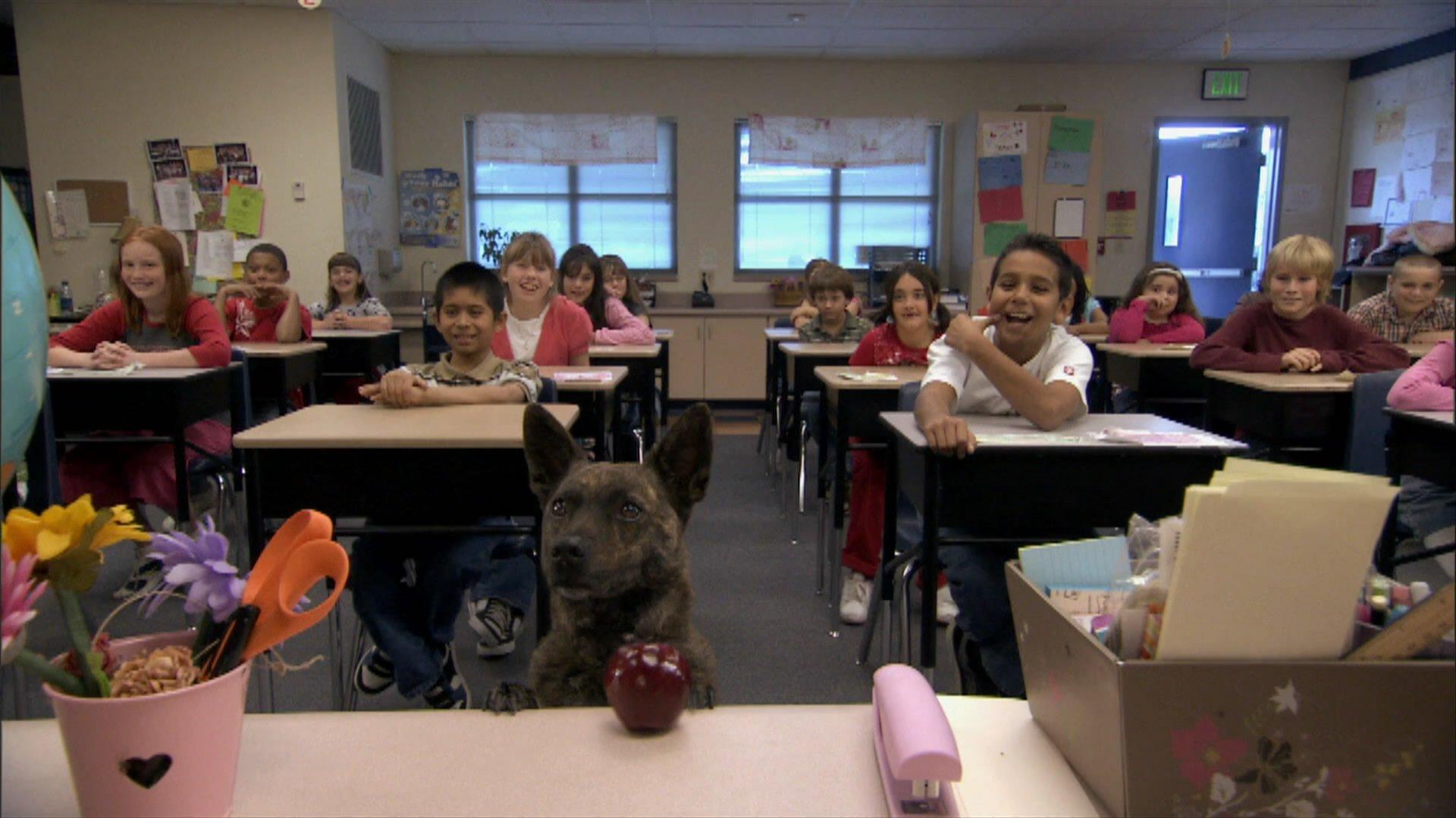 Первый пес смотреть фото