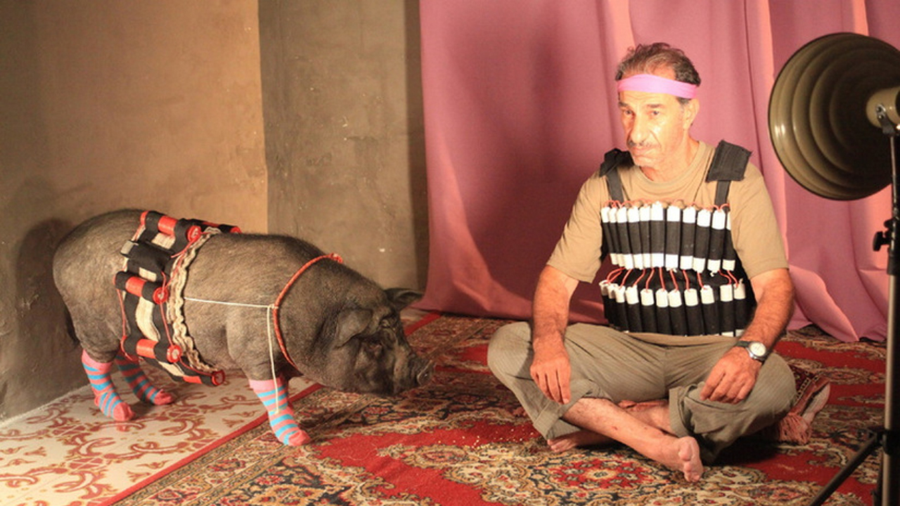 Перелетные свиньи смотреть фото
