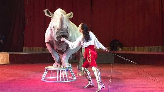 Цирк больших зверей