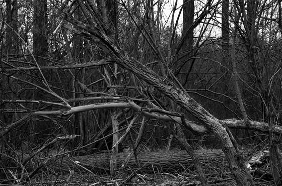 Натюрморт: тихая жизнь & мертвая природа