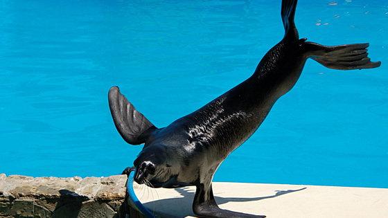 Цирковое представление с дрессированными морскими животными