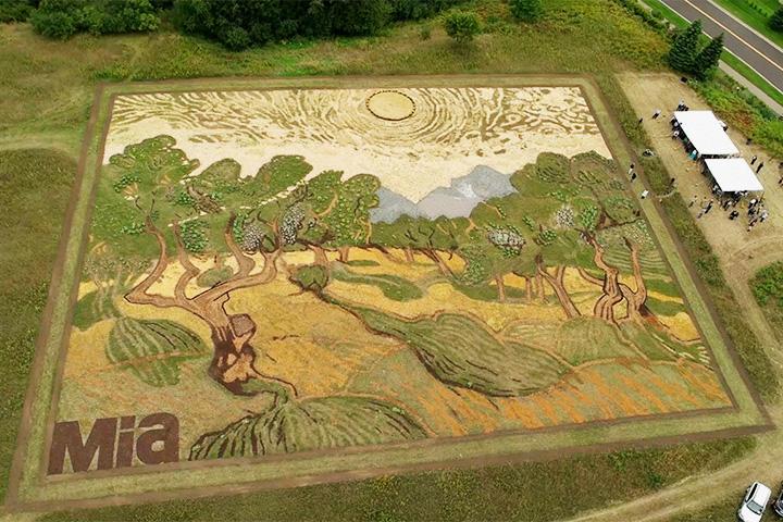 Гигантская репродукция Ван Гога, созданная из растений и дорожек