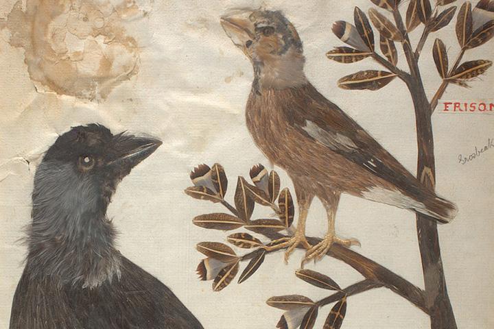 Птичий гербарий
