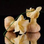 Ресторан Buba by Sumosan - фотография 5 - Хрустящие крабовые мешочки