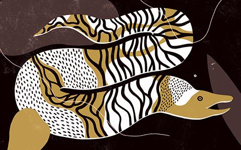 «Книга о самых невообразимых животных» Каспара Хендерсона