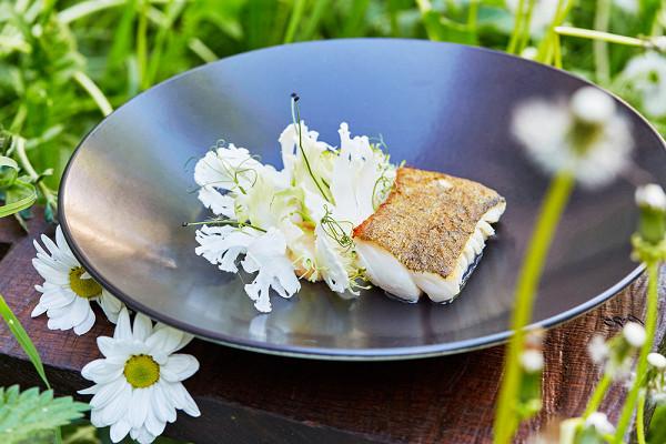 мурманская треска с пюре из запеченной цветной капусты, слайсами подмаринованной с апельсиновым соком и медом цветной капусты и брокколи (750 р.)