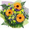 Best Flora